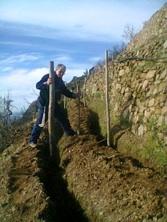 Cinque terre vineyard
